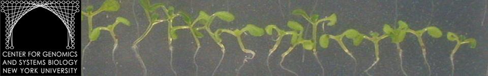 Plant Systems Biology @ The Coruzzi Lab